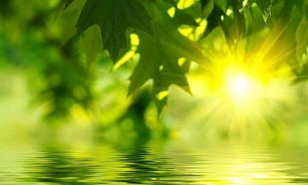 Green-Leaves-Sunlight